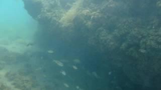 Vasto fondo marino, al campeggio Grotta del Saraceno.