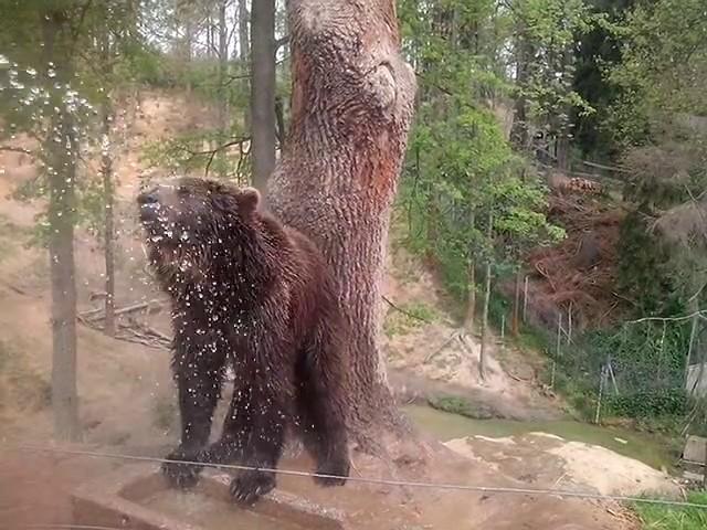 Jak se chladíme v horkých dnech /  Brown Bear Zoo Tábor