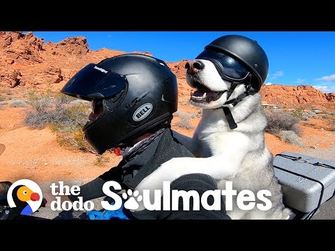 Dog Rides A Motorcycle With His Dad Through All 50 States | The Dodo Soulmates