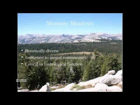 """Prioritizing Conservation Areas: A Look at """"Climate Refugia"""""""
