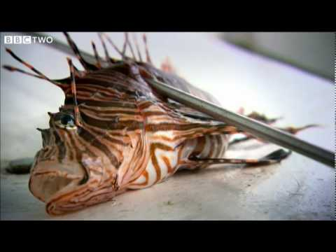 Alien Invaders Threaten the Caribbean - Tropic of Cancer - BBC Two