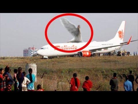 Silinmeden önce hızlı bir şekilde izleyin. Çünkü bu videoyu açıklamak imkansız !!!!!