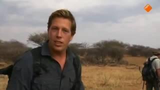 Freeks wilde wereld   De Cheetah
