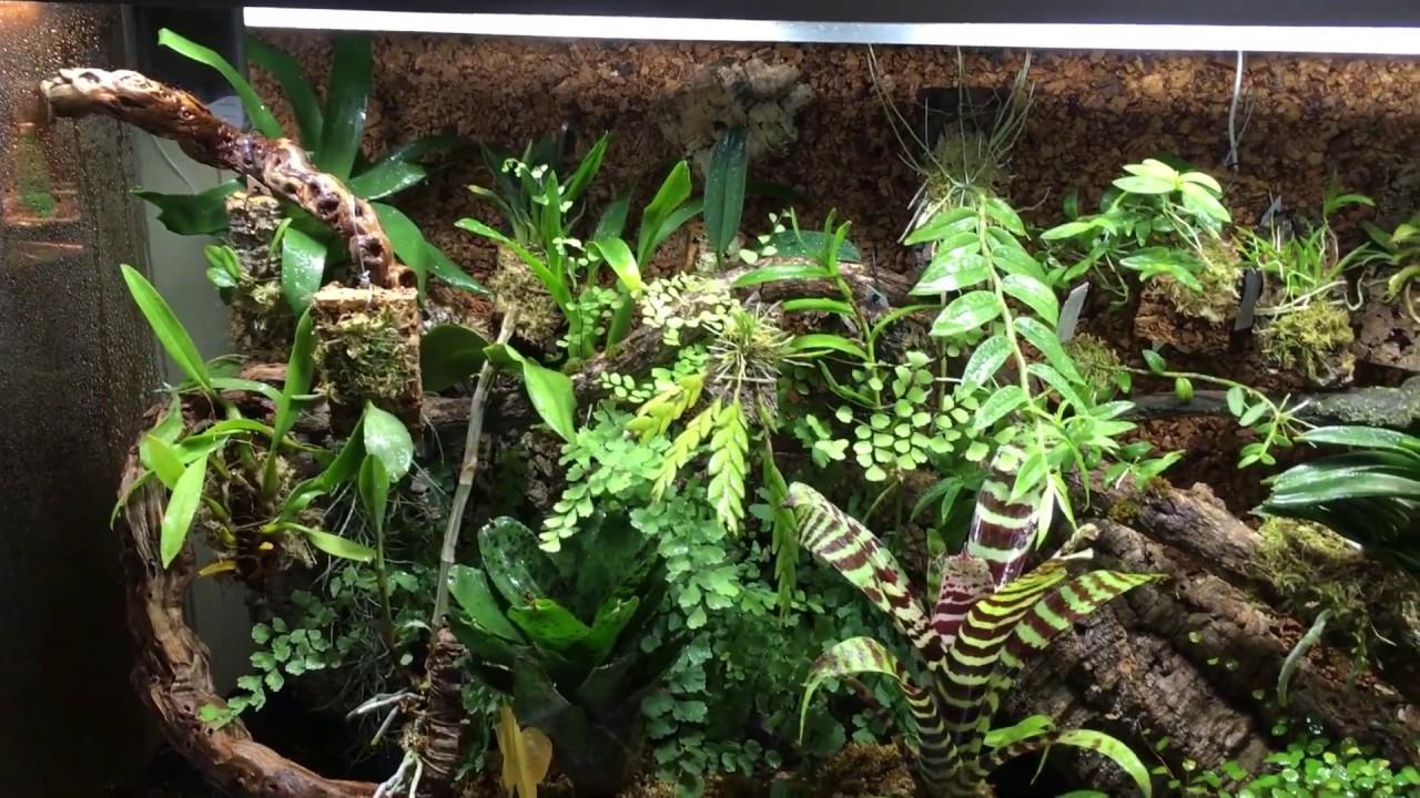 Mein Orchideen Terrarium Youtube