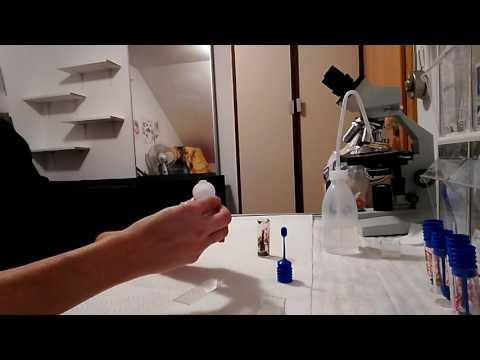 Kotuntersuchung Flotation + Mikroskop Seben