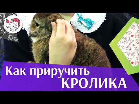 Вопрос: Как приручить своего кролика?