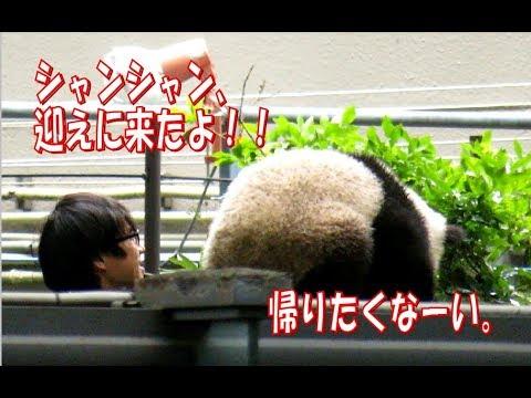 【シャンシャン回収】イケメン飼育員vsシャンシャン(1) ABC Panda movies