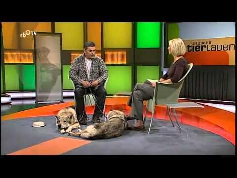 tschechoslowakischer wolfshund ein rasseportait youtube. Black Bedroom Furniture Sets. Home Design Ideas