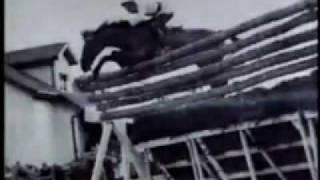 World Record Show Jumping * Huaso Horse *