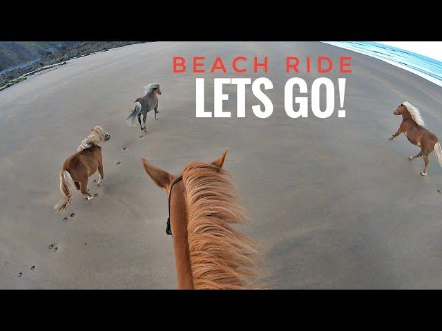 Beach Ride with only GINGER Horses and matchy Dog!