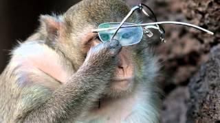 басня крылова мартышка и очки читает игорь козлов