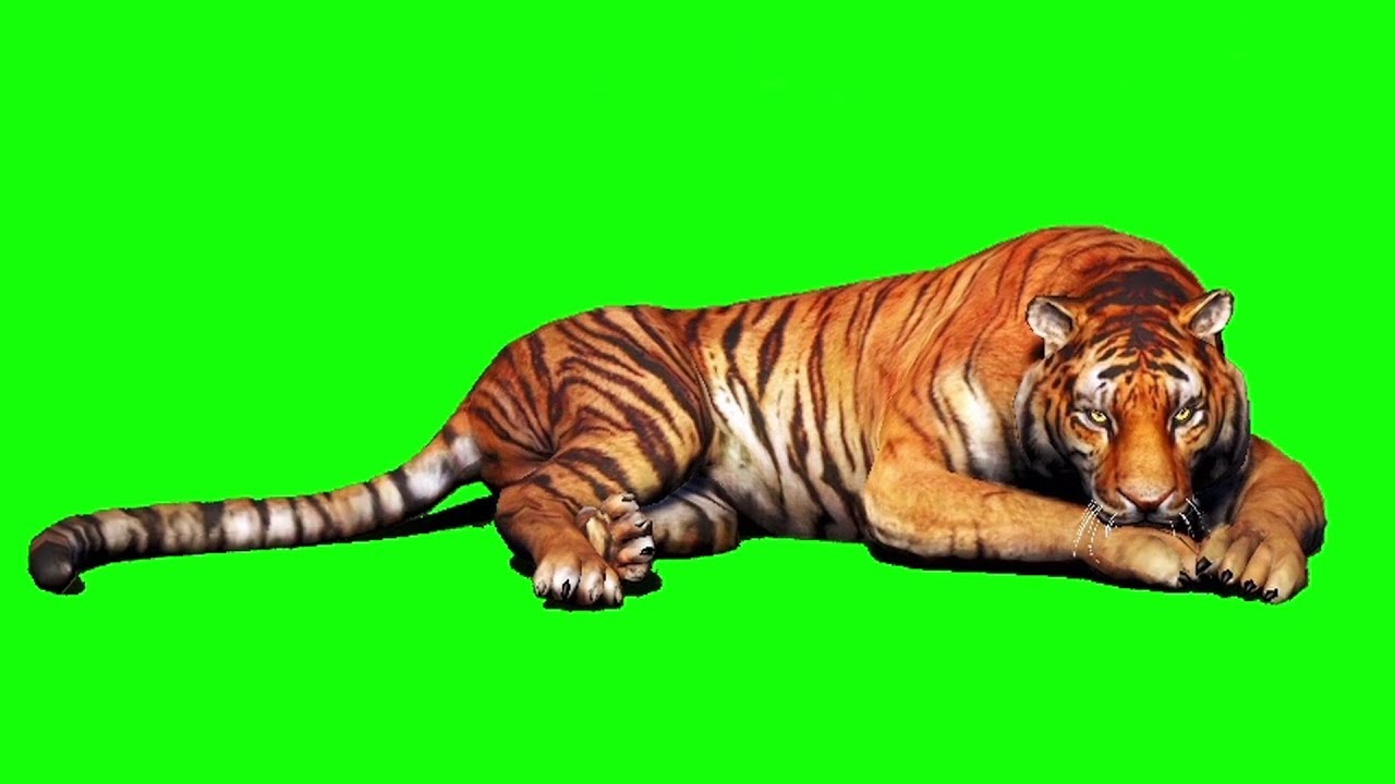 Tiger green screen