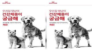 로얄캐닌코리아, '2021 반려동물 체중관리 캠…