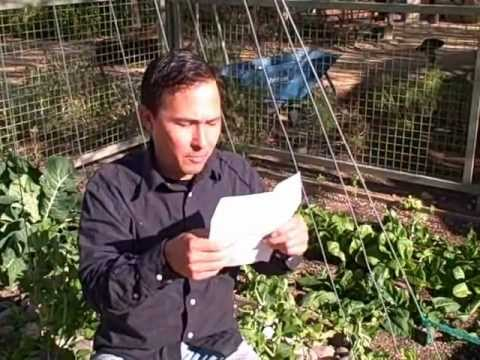 GMO Seeds in My Garden? Will Lettuce Cross Pollinate? and More Gardening Q & A