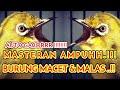 Masteran Kecial Kuning Ampuh Untuk Burung Baru Belajar Bunyi  Mp3 - Mp4 Download