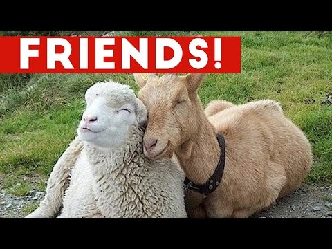 Thumbnail: Funniest Unlikely Animal Friendships Compilation | Funny Pet Videos