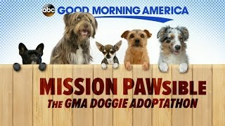 Top Doggie Moments from 'GMA' Pawdoption