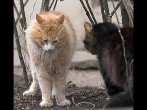 gatti e altri animali in splendide e simpaticissime