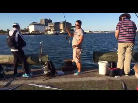 Fishing in Newcastle Harbour
