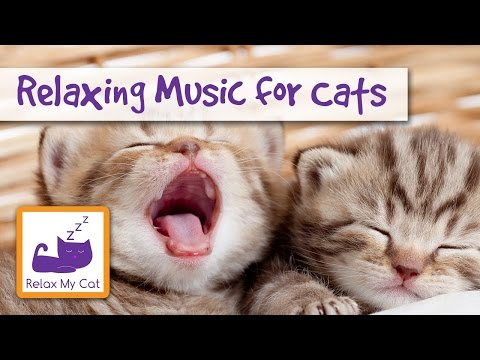 Improve Cat Behaviour with Relaxing Music 🐱 #BEHAVE03