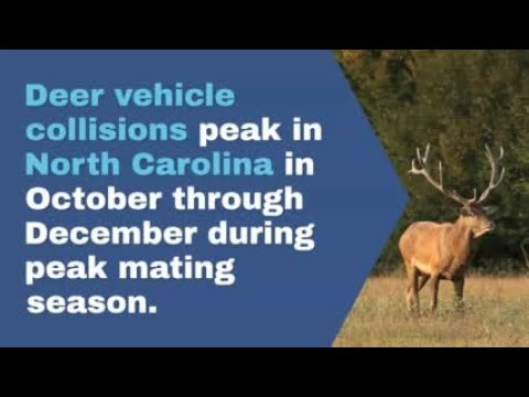 WATCH NOW: Avoid a collision with deer this fall