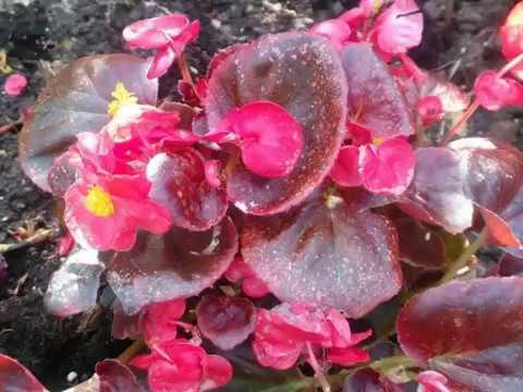 Guzel çiçekler Youtube
