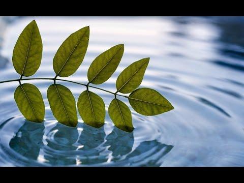 "Spiritual Discoveries ""Open Leaves"" Yamagara"
