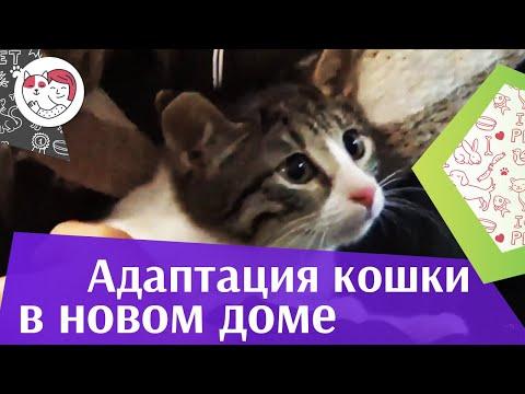 Как приучить кота к новому месту жительства