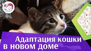 5 советов, которые помогут кошке адаптироваться в первые дни жизни в доме на ilikepet