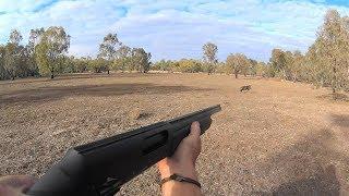 Pig Cull Western NSW