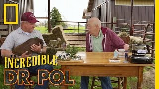 Don't Sweat It - Season 3, Episode 6 | Coffee Break With Dr. Pol