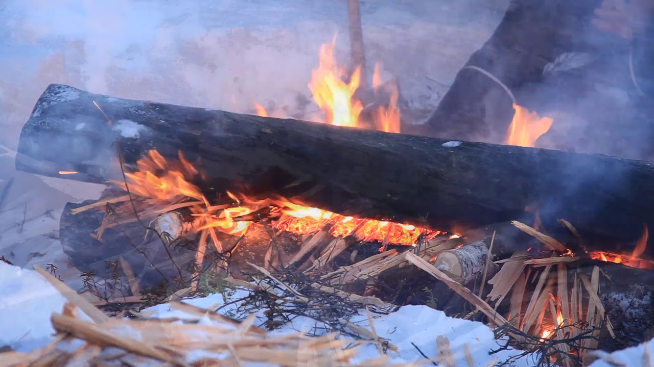 Woodlore Winter Bushcraft in the Northern Forest with Ray Mears