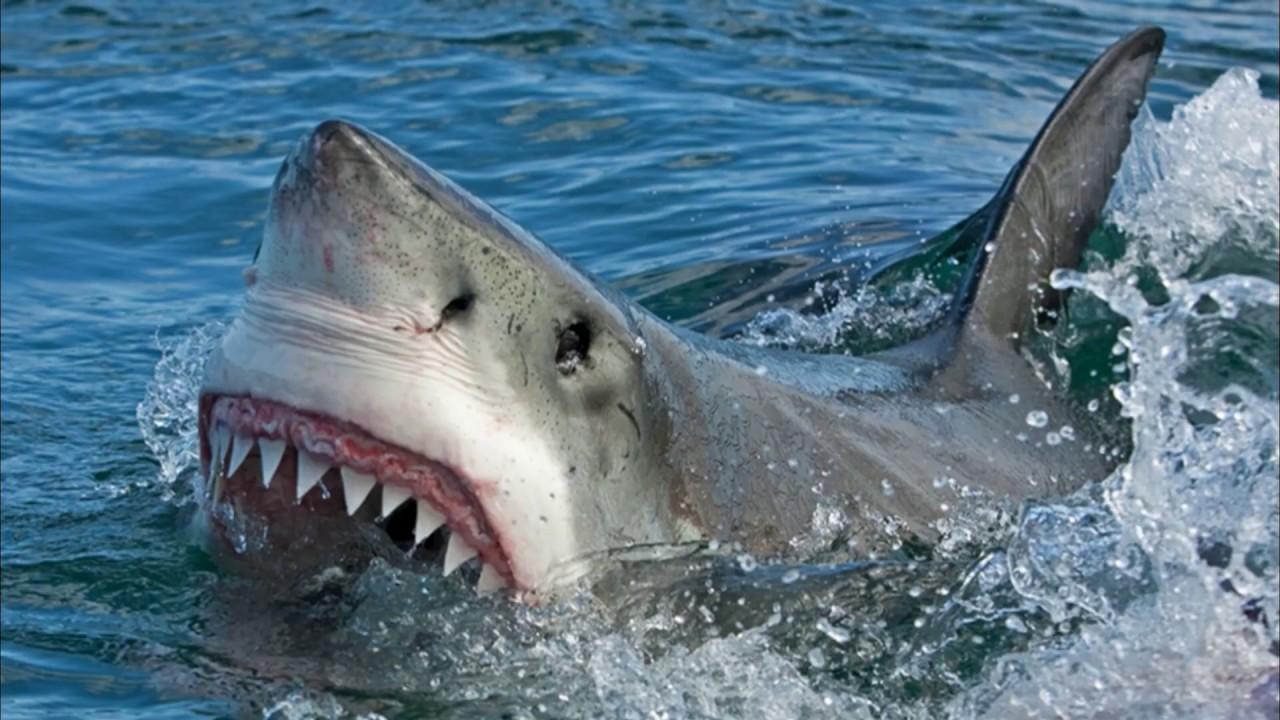 care este viziunea rechinului minus 5 și minus 6 viziune