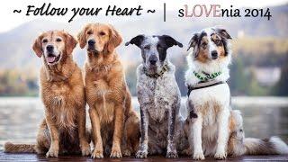 ♡ Follow your Heart ♡   sLOVEnia 2014