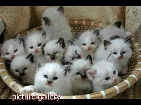 cute cats hd picture gallery youtube