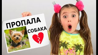 Dominika Lost her Dog Пропала Собака
