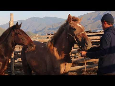 о тувинских лошадях