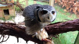 2 days of feeding a Caiman, Turtles & Owl thumbnail