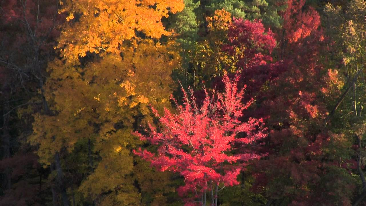 Fall Color at Brown County State Park | Indiana DNR - YouTube