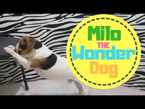 Super Milo  :)