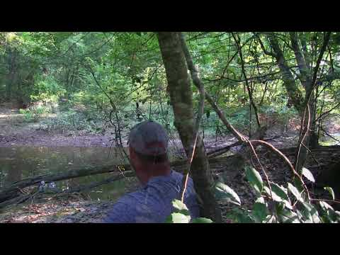 Bear and Cubs Almost Attack Hunter!