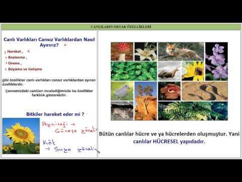 CANLILARIN ORTAK ÖZELLİKLERİ (Fen Bilimleri 6. Sınıf Konu Anlatımı)