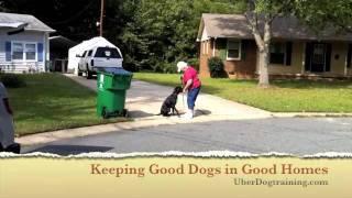 Uber Dog Training. Aggressive Dog.lesson One