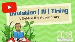 Ovulation | Artificial Insemination | Timing : A Golden Retriever Story (2018)