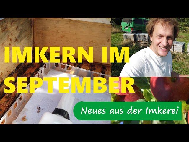 Imkern im September 2020 - Futterkontrolle/ Varroakontrolle - Neues aus der Imkerei