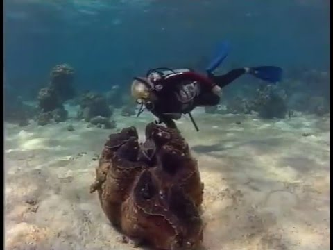 Thumbnail: Giant Clams in the South Pacific