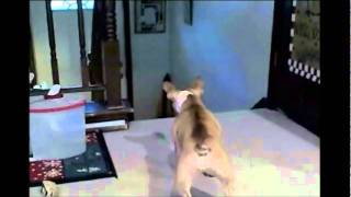French Bulldog Vs Cat
