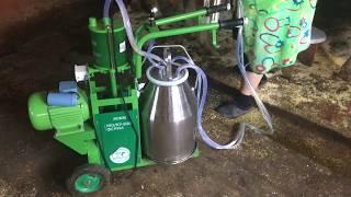 Доение коров Доильным аппаратом