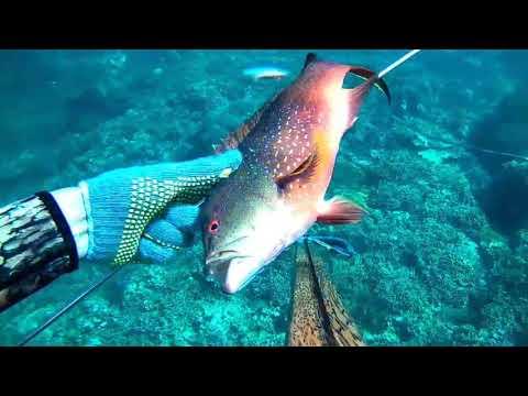 Berburu Ikan Dengan Panah#speargun