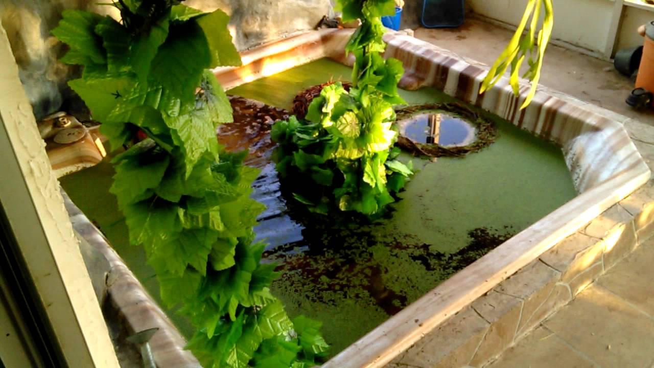 Hot Tub Pond 053116 Youtube